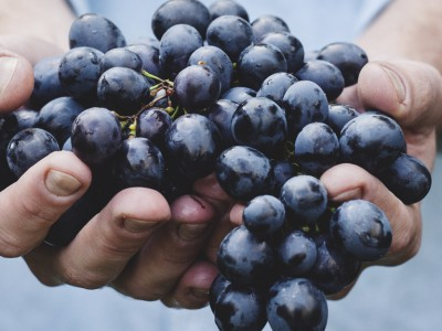 unsplash grapes